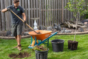 Digging a hole and putting the dirt into a wheelbarrow to plant a tree