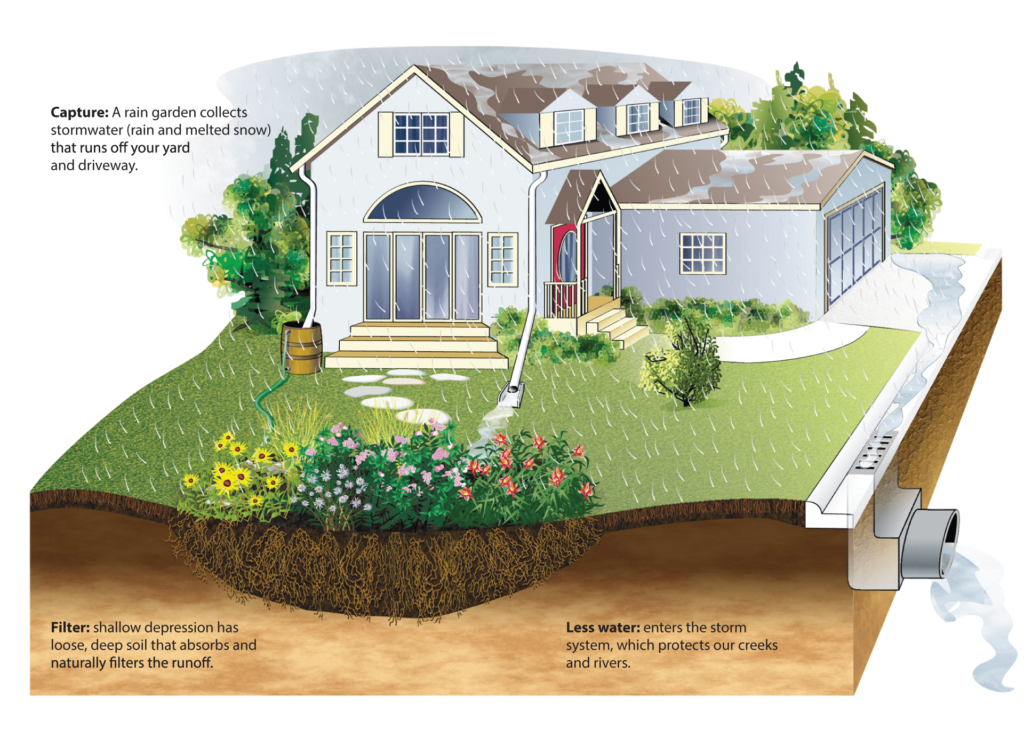 house and rain garden illustration to show how rain seeps into the ground from a rain garden and replenishes ground water