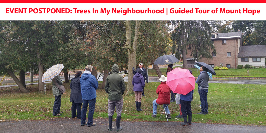 EVENT POSTPONED: Trees In My Neighbourhood   Guided Tour of Mount Hope