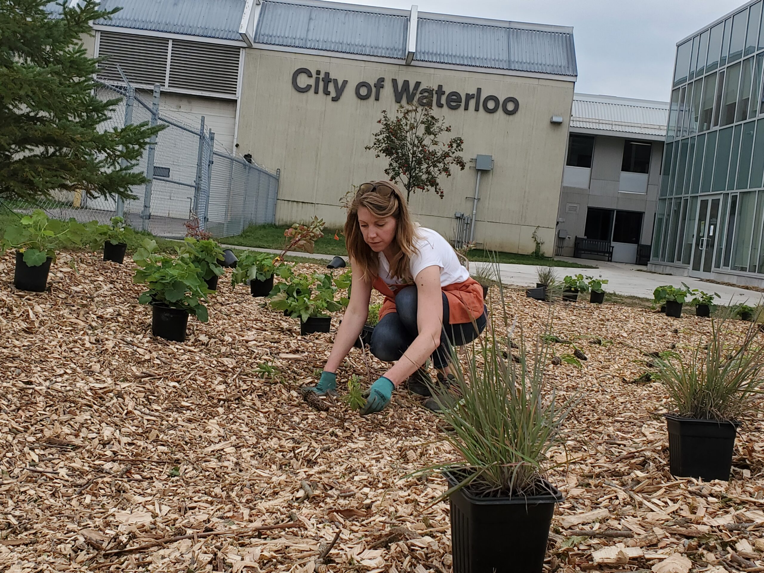 Becca, rain garden coach planting during a work party at the waterloo service centre