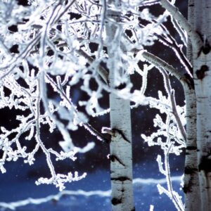tree branches in winter covered in ice crystals