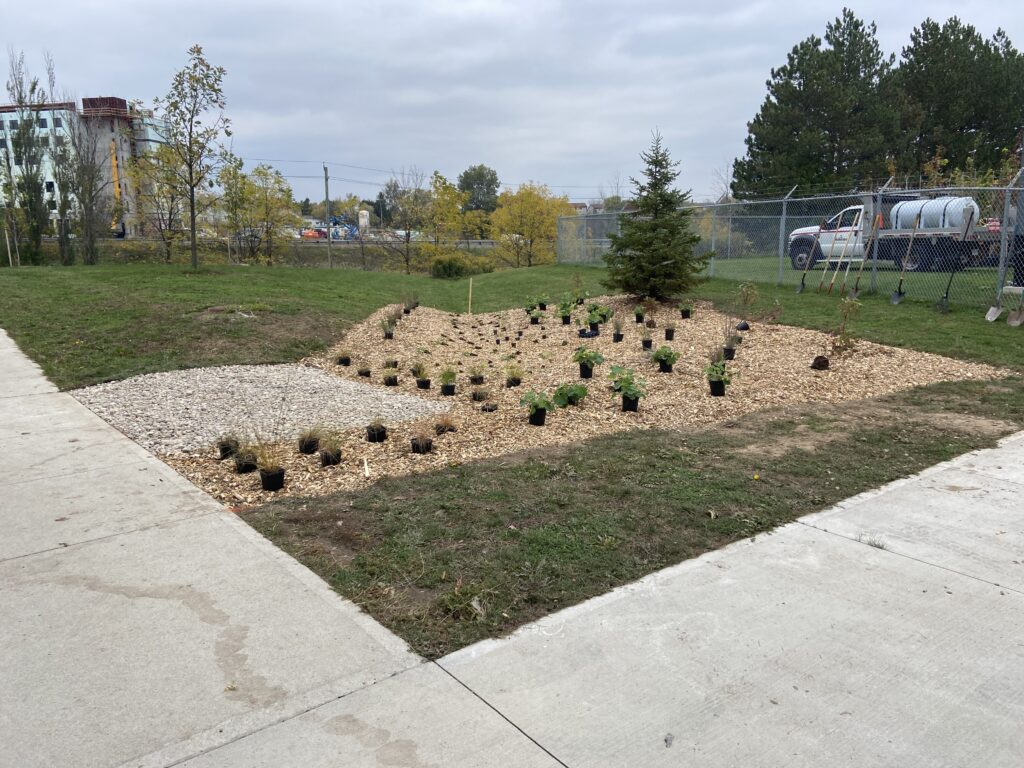 plants arranaged on mulch to be planted for rain garden