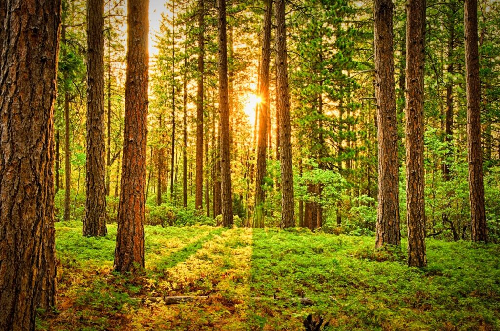 bright forest with shining light from the sun behind