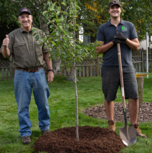 matt tree planting homeowner small
