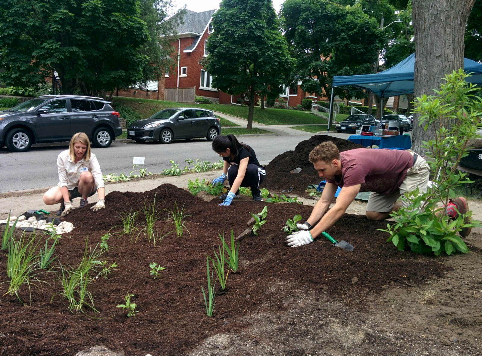 rain garden work party, gardeners planting