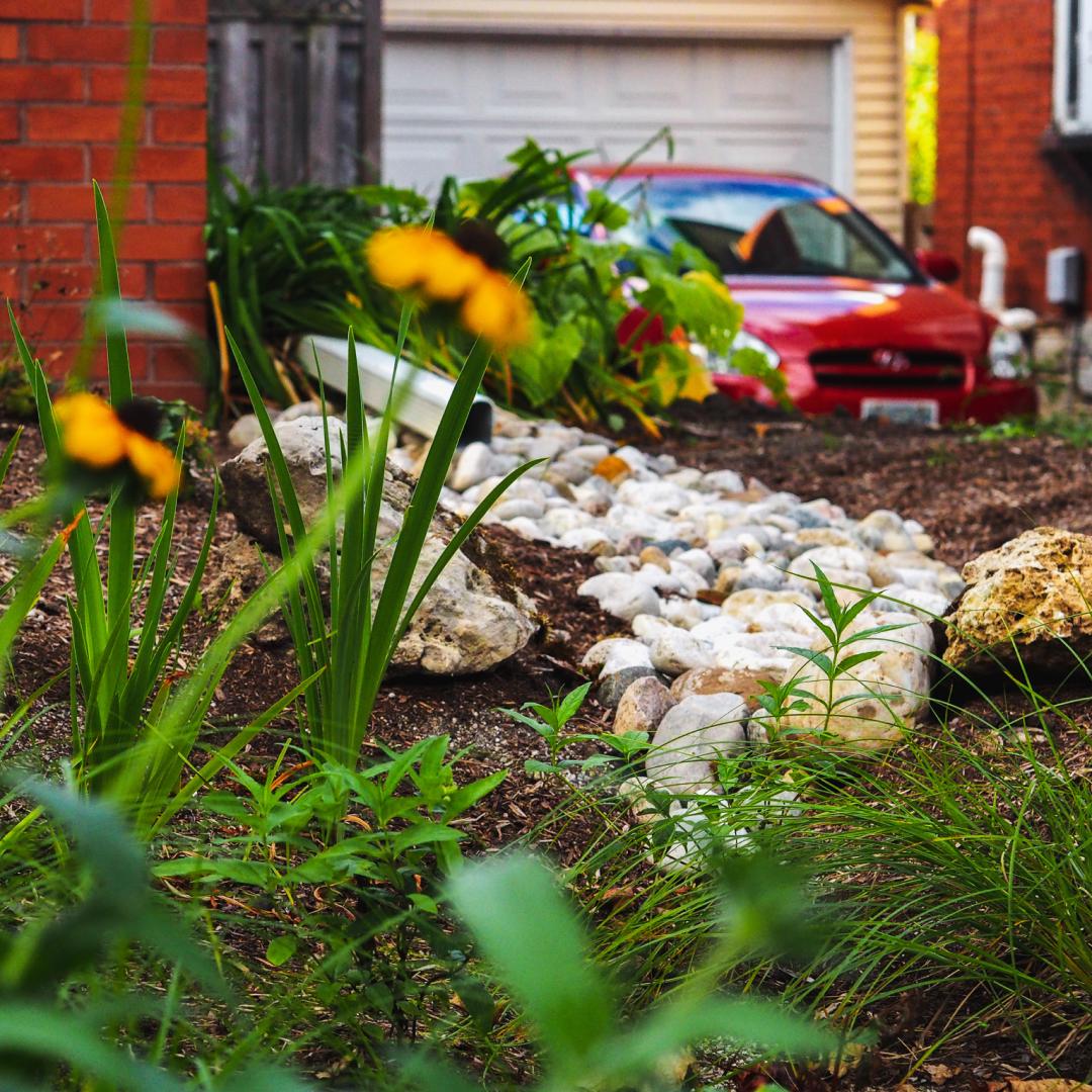 A downspout drains onto rocks leading into a rain garden