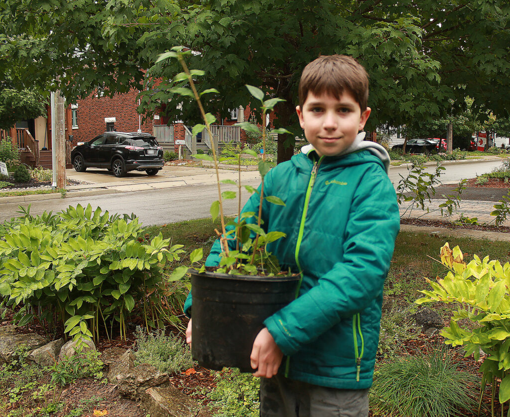 A young man carrying a shrub in a black pot.