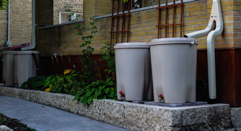 Two rain barrels sit on a ledge with a downspout pointing into them