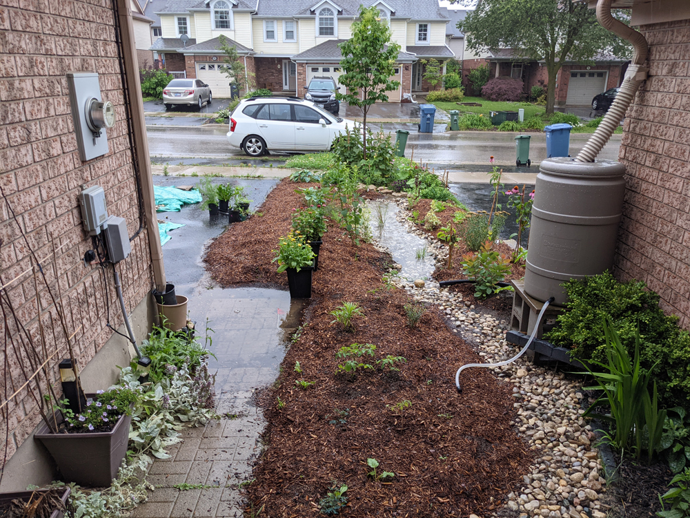 A rain garden with brown mulch and a trail of rocks down the middle