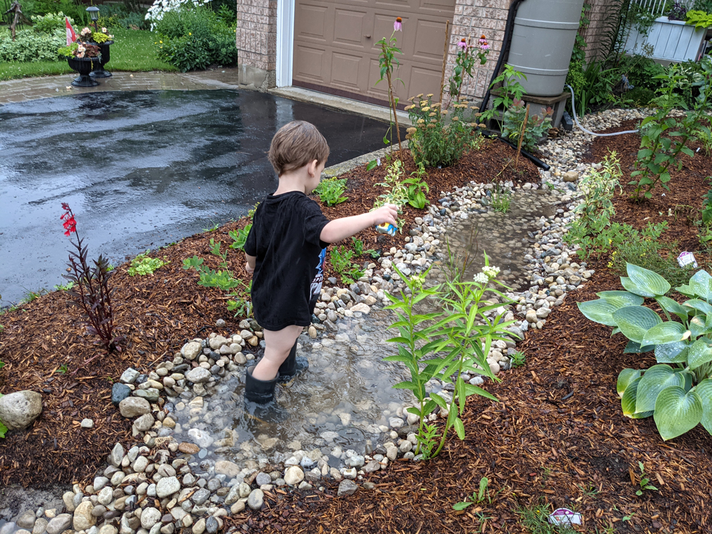 A toddler splashes in a puddle amid a rain garden